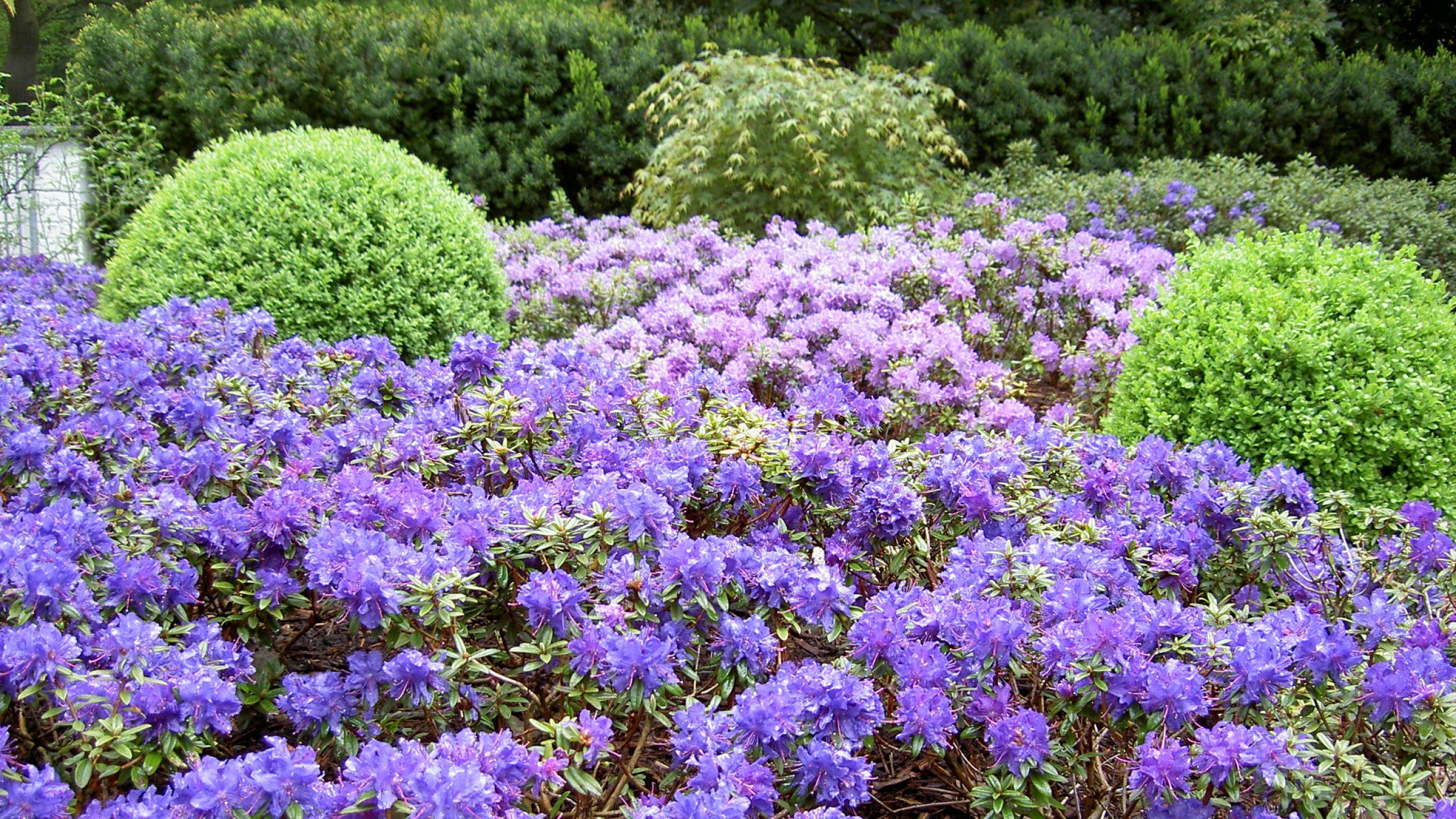 Schauß Schöne Gärten!